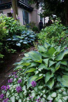 Shady garden combinations - All About Garden Shade Garden Plants, Cottage Garden Plants, House Plants, Shade Landscaping, Garden Landscaping, Landscaping Ideas, Side Garden, Lawn And Garden, Garden Leave