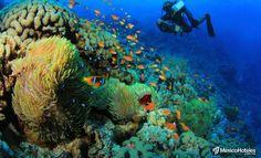 México abrirá un parque submarino en el mar de Rosarito!! Al final del mes de Noviembre se tiene planeado hundir el Barco Oceánica llamado Uribe 121 en las aguas de Rosarito en Baja California México en el Pacífico Norte. Este va a ser el primer paso para lo que será el 'Parque Submarino Rosarito' lo que sucede con estas estructuras bajo el mar es que se convierten en arrecife artificial tu ves como las especies marinas se apropian de los espacios y crecen en los restos. Además de volverse…