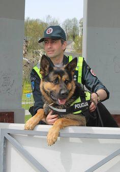 Lithuanian Police Dog, German Shepherd