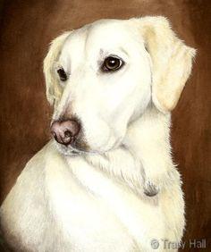 portrait d'animal familier Labrador dans l'aquarelle par Tracy Hall