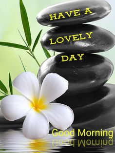 G Morning, Good Morning Wishes, Good Morning Images, Good Morning Quotes, Friday Wishes, Morning Greetings Quotes, Happy Monday, Green Leaves, Good Day