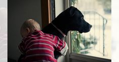 あなたは「犬の十戒(じっかい)」という詩をご存知でしょうか。犬の視点から「犬への正しい接し方」を伝えた詩で、世界中に様々な形で広がっています。 今回は、そんな犬の十戒をご紹介します。 1. 私は10年くらいしか生きられません。どうか、私と暮らす前にそのことを覚えておいて欲しいのです PIXTA 2. あなたが私に何を求めているのか、私がそれを理解するまで待って欲しいのです PIXTA 3. 「私を信頼して欲しい」それが私にとっての幸せです Tara Hana Prucha 4. あなたには他に楽しみがあって、友達もいるかもしれない。でも、私にはあなたしかいません flickr.com/Nan Palmero/Dog Looking Out the Window 5. たまに話しかけて欲しいです。言葉は分からなくても、あなたの声は私に届いています flickr.com/Uriah Welcome/IMG_4953 6. あなたがどのように私を扱ったか、私はそれを決して忘れません flickr.com/Ben Grey/Free Hugs 7...