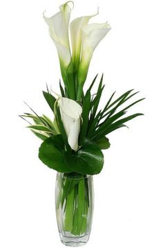 Share your sympathies with a beautiful and artistic vase arrangement of white calla lilies.
