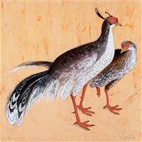 Eared pheasants