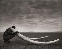 "Nick Brandt - Ranger with Tusks of Killed Elephant, Amboseli 2011 - From ""Across the Ravaged Land (Pt 1 : 2010-2011)"" portfolio."
