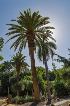 Park, Santa Cruz, Tenerife, Canary Islands #park, #santacruz, #tenerife, #canaryislands