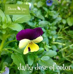 This daily dose of color has been brought to you by Ann & Karen of Divine You Crafts. Follow the link in our bio and sign up to receive a FREE Mindful Art and Conscious Craft Practice Guide from Divine You Crafts.