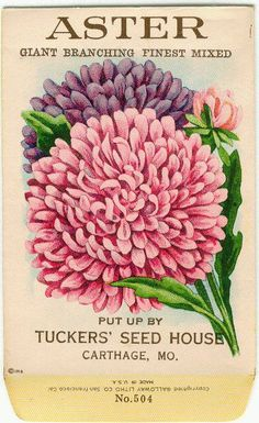 ASTER Giant Branching Finest Mixed Vintage Flower by gardenlelah Vintage Labels, Vintage Ephemera, Vintage Cards, Vintage Images, Garden Catalogs, Seed Catalogs, Vintage Seed Packets, Seed Packaging, Vintage Gardening