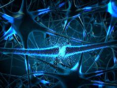 El sistema nervioso es uno de los sistemas que componen al organismo. La función de este es coordinar, por ello, también puede recibir el nombre de sistema de coordinación nervioso..