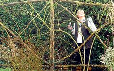 Helen Yemm solves your gardening problems. This week: renovating an old rose and growing lily of the valley for a wedding.