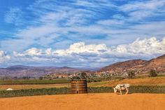 Finca Altozano ~ Lunch with a View in the Valle De Guadalupe | Sunny Coastlines