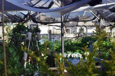 Green in the city Urban farm http://livingreen.co.il/en/urban-farming-israel-en/