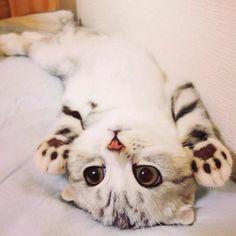 Кошка Хана с большими глазами, взявшая Instagram штурмом (24 фото)