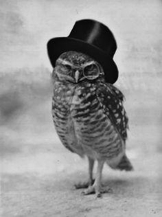 dapper owl~