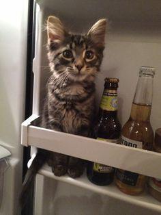 Das Katzen nicht in den Kühlschrank gehören, weißt du. Aber auch, dass Tomaten nichts im Kühlschrank verloren haben? Wir verraten dir, warum: http://www.gofeminin.de/wohnen/kuhlschrank-richtig-einraumen-s1558609.html