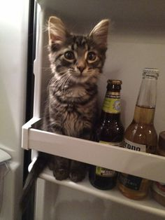 (the cat) tastes great, (the beer is) less filling.