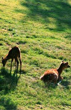 Полиция Праги призвала население к осторожности Kangaroo, Moose, Animals, Baby Bjorn, Animales, Animaux, Mousse, Animal, Animais