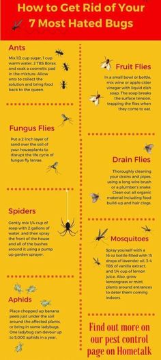 DRAIN FLIES, not fruit flies: Clean the drain.I wonder if vinegar/baking soda/boiling water would work? How to get rid of most hated bugs - spiders ants flies mosquitos / diy bug spray Bug Control, Pest Control, Mosquito Control, Diy Cleaning Products, Cleaning Hacks, Fruit Flies, Insect Repellent, Gnat Repellant, Cockroach Repellent