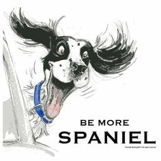 """Fantastic """"cocker spaniel"""" info is offered on our internet site. Read more and you wont be sorry you did. Springer Dog, Springer Spaniel Puppies, Cocker Spaniel Dog, English Springer Spaniel, Hachiko, Brittany Spaniel, Dog Art, Dog Pictures, Cute Dogs"""