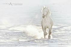 White horse catch by Marcin Lipiński (Studio A)
