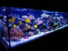 How frequently do you use carbon? What are your reasons for your use (or non-use) of GAC? Click the link to vote in our poll and share your thoughts. Aqua Aquarium, Saltwater Aquarium Fish, Aquarium Design, Saltwater Tank, Marine Aquarium, Fish Tank Themes, Fish Aquarium Decorations, Marine Fish Tanks, Fish Tank Design