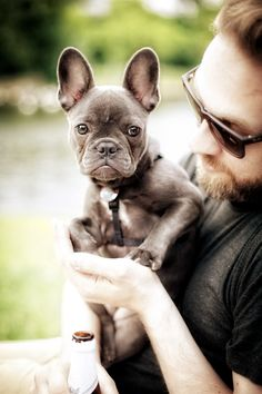 Frenchie, French Bulldog Puppy