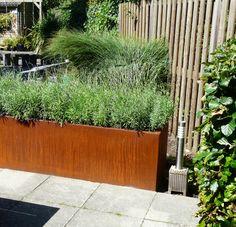 Of je het nu subtiel of grof toepast, het is en blijft ongekend populair als materiaal voor allerhande tuinelementen. Tuinafscheidingen, decoratieve objecten en plantenbakken, je kunt er alle kanten mee op. En dat is niet zonder reden want Cortenstaal heeft een schitterende warme tint, is robuust, natuurlijk ogend en herbruikbaar. Het mooie van cortenstaal is dat het materiaal in elke tuin past. Zowel in een moderne tuin, een natuurlijke als een romantische Plants, Plant, Planting, Planets