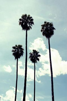 Palm/cali