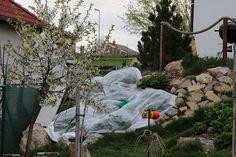 Když hrozí jarní mrazíky, snažím se zachraňovat kvetoucí jahody netkanou textilií. Ne vždy je ale zvádne ochránit.