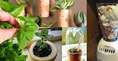 """10 dicas para começar um """"jardim"""""""