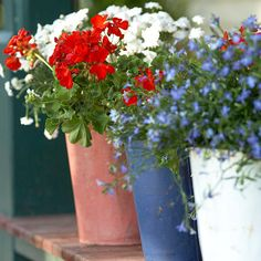 Red, white and blue (geraniums and lobelia) in vintage flower pots. Fox Hollow Cottage: In Remembrance and Celebration on Memorial Day 4th Of July Celebration, 4th Of July Party, Fourth Of July, White And Blue Flowers, Red And White, Blue Plants, Red Geraniums, 4th Of July Decorations, Craft Decorations