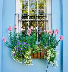 window box in Charleston, SC via Mark Swick