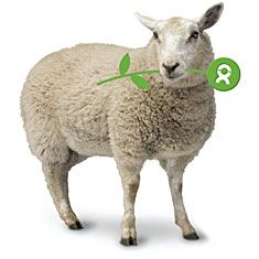 You are what you give. Donate a sheep. Be the best thing to happen to a family and the best gift you've ever given with charity gifts from Oxfam Unwrapped.