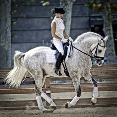 Dressage. The most beautiful sport.
