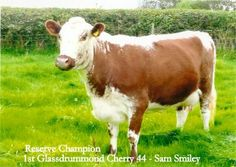 Photo comp results 2014 - Irish Moiled Cattle Society