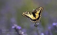 yellow by alenka1. @go4fotos