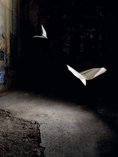 fold, fly