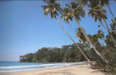 Gandoca – Manzanillo Refuge stands out for the beauty of its sandy beaches, gentle waves, coral reefs, and tropical forests vibrant with lif...