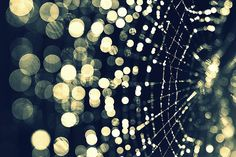 72 stunning examples of bokeh photography