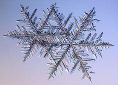 Stellar real snowflake