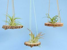 ideas for planting air plants ; ideen zum pflanzen von luftpflanzen ideas for planting air plants ; Mini Terrarium, Air Plant Terrarium, Air Plant Display, Plant Decor, Hanging Air Plants, Indoor Plants, Patio Plants, Hanging Baskets, Air Plants Care