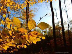 Iserlohner #Herbstimpressionen  #Iserlohn #Waldstadt #Sauerland #MärkischerKreis #Südwestfalen #NRW #NordrheinWestfalen #Wälder #Bikographer #wuvgram #diewocheaufinstagram #Panorama #landscape #Wald #wood #S