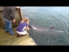 """VIDEO: """"Dusty the Dolphin at Doolin"""" -From YouTube.(There is a ferry boat that crosses from Doolin on the west coast of Ireland across to the island of Inis Oirr in Galway Bay. Inis Oirr has a population of about 300 and all are said to speak the Irish Language. jp)"""