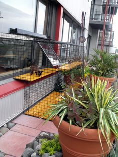 Deck cat enclosure for a highrise Beautiful World Living Environments www.abeautifulwor...