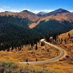 Driving off in the direction of the Independence Pass from #Aspen to #Denver.....curves views leaves blue and yellow...our head is spinning! #travel #RoadTripUSA @findingremote #autumn #indiansummer