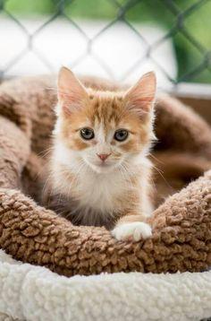 Precious fur baby