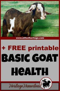 Goats Goat Care Goat Health FREE Basic Goat Health Information, Upkeep and Health Tracker Printable. Keep track of your goats information on a regular basis. Female Goat, Happy Goat, Goat Barn, Raising Goats, Keeping Goats, Nigerian Dwarf Goats, Baby Goats, Mini Goats, Goat Farming