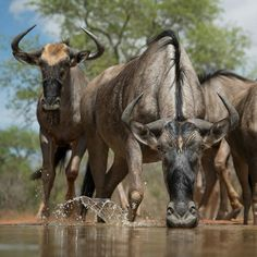 Dinokeng Game Reserve Tour | 2 Nights Family Leisure, Game Reserve, Safari, Tours, Games, Night, Nature, Animals, Animales