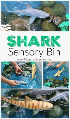 Looking for shark week activities for kids? This simple shark sensory bin requires minimal supplies and provides tons of fun!