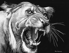 Whiskers and Teeth by *ronmonroe on deviantART (traditional media drawing)